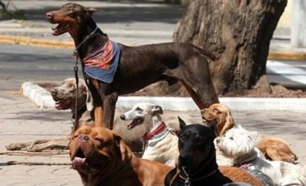 perros Condesa