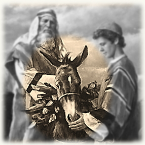 abrahams_donkey_small