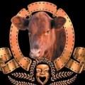 הפרה האדומה - חיים בסרט?! (באדיבות 'מקור ראשון' - צילום: גיל אליהו, ג'יני)