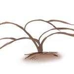 バラの分類/バラの樹形を知れば、そのバラに合った仕立て方から育て方まで理解できる!