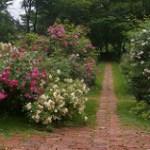 バラ園に行こう/北海道のバラ園ガイド