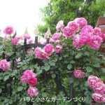 バラの花言葉を色別にご紹介! 読物として楽しめるよう豆知識満載です♪