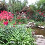 横浜イングリッシュガーデンが「世界バラ会議」で「優秀庭園賞」を受賞!