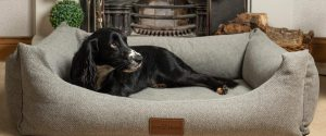 The Lounger Dog Bed in Pewter