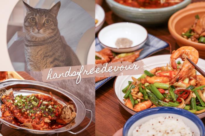 漢食福利的貓  貓奴天堂!台中勤美療癒餐廳,萌貓陪你吃飯,招牌川菜料理,香辣過癮好滋味!
