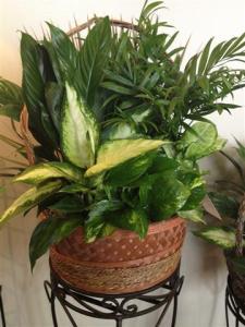 Sympathy (plants)