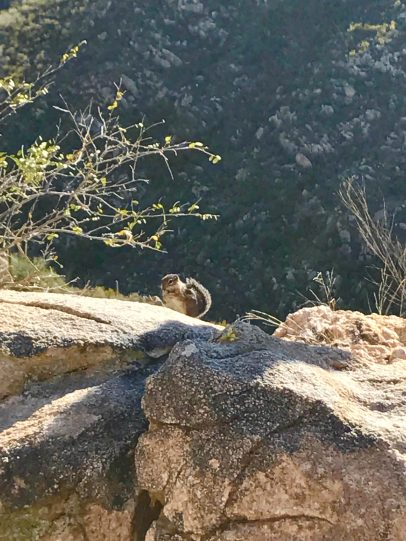 A friendly chipmunk, which we spotted far from that guy <--