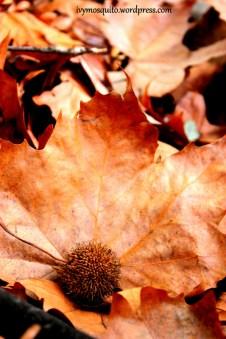 Ivymosquito.wordpress.com