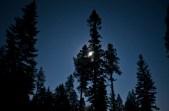 Night Exploration - Trees & Moon