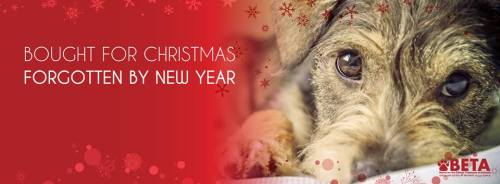 BETA Christmas banner