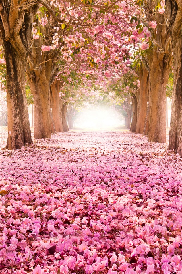 Pink indus flowers path trees beautiful scenery iPhone X 876543GS wallpaper download