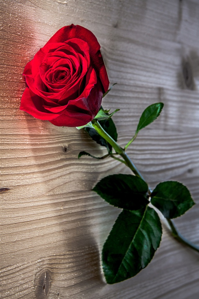 Cute Iphone 5s Wallpaper Red Rose Flower Wooden Table Iphone X 8 7 6 5 4 3gs