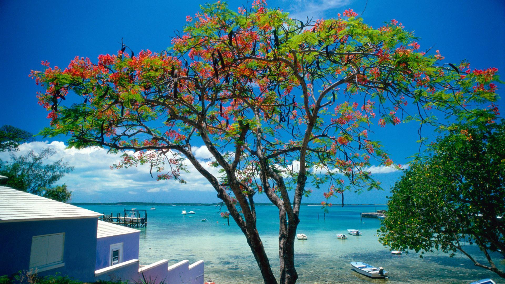 Summer Wallpaper Hd Tropical Escape Bahamas 10 000 Fonds D 233 Cran Hd