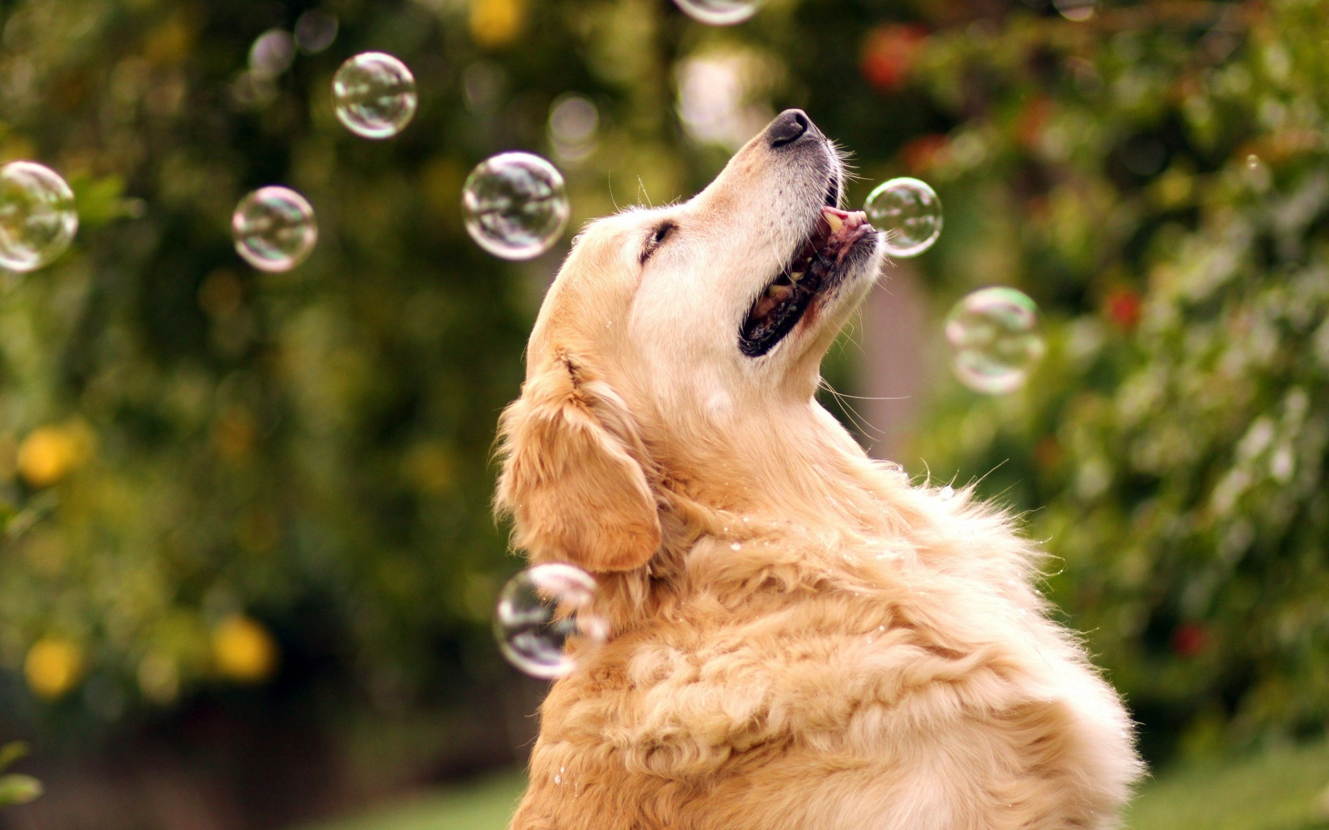 Cute Golden Retriever Wallpaper Bilder Von Retriever Hunde Schnee Tiere