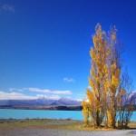 Memories of NZ Pt1: Scenic Turns Everywhere!