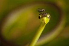 fly-cap-for-a-vine-snake