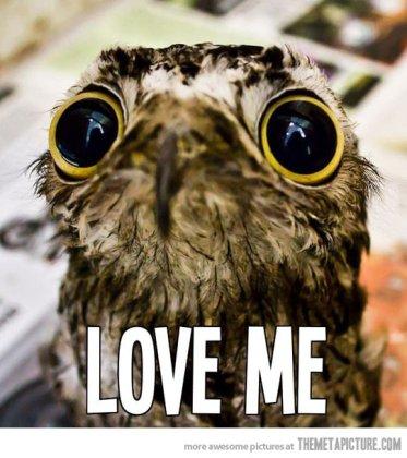 Reasons Why I Love Owls 01