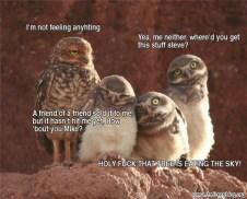 Reasons Why I Love Owls 06