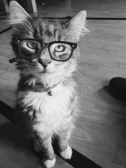 Random Cat Craziness 01