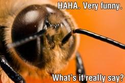 The Male Honeybee 06