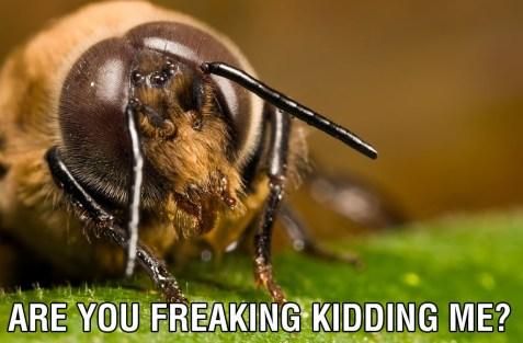 The Male Honeybee 08