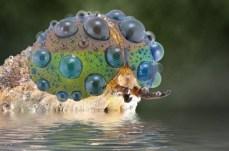 Close-Up Bug Eyes 02