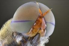 Close-Up Bug Eyes 05
