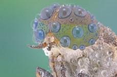Close-Up Bug Eyes 06
