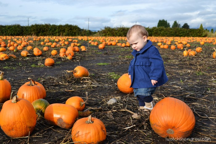 Halloween photo ideas - pumpkin picking