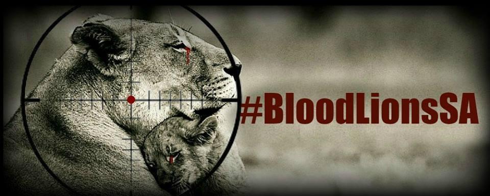 Blood Lions SA