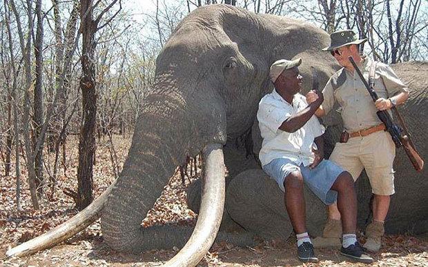 Elephant killed by Russian trophy hunter in Zimbabwe