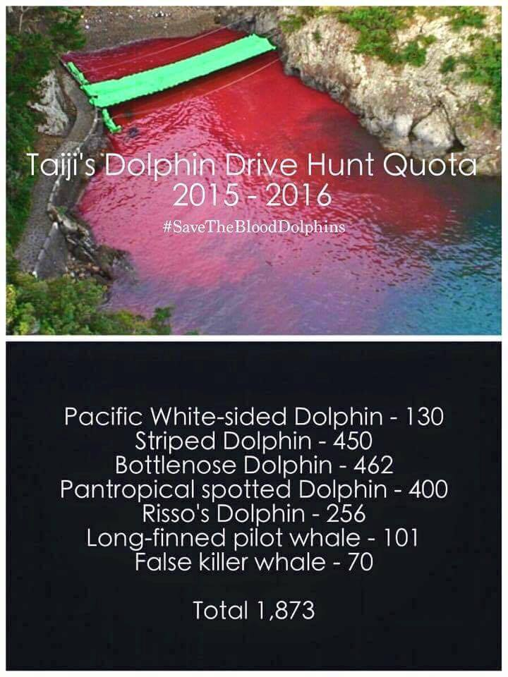 taiji dolphin killing speech Fighting to save dolphins with your help we are ending the pitiless killing of dolphins in japan and over 2,000 are killed in the cove at hatajiri bay in taiji.