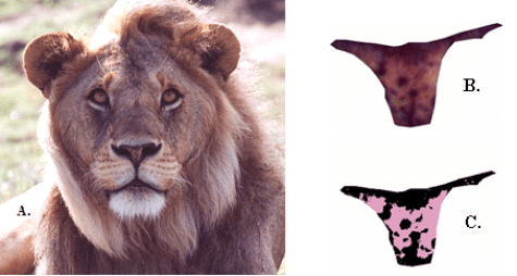 Lion Nose Pigmentation