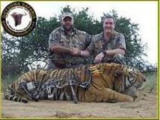 Gotsoma-tiger-trophy