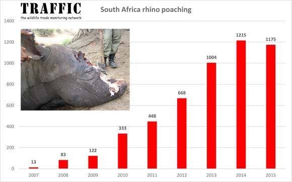 Rhino Horn Poaching in South Africa