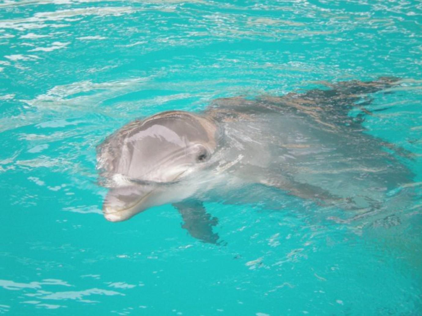 Dolphin Captive