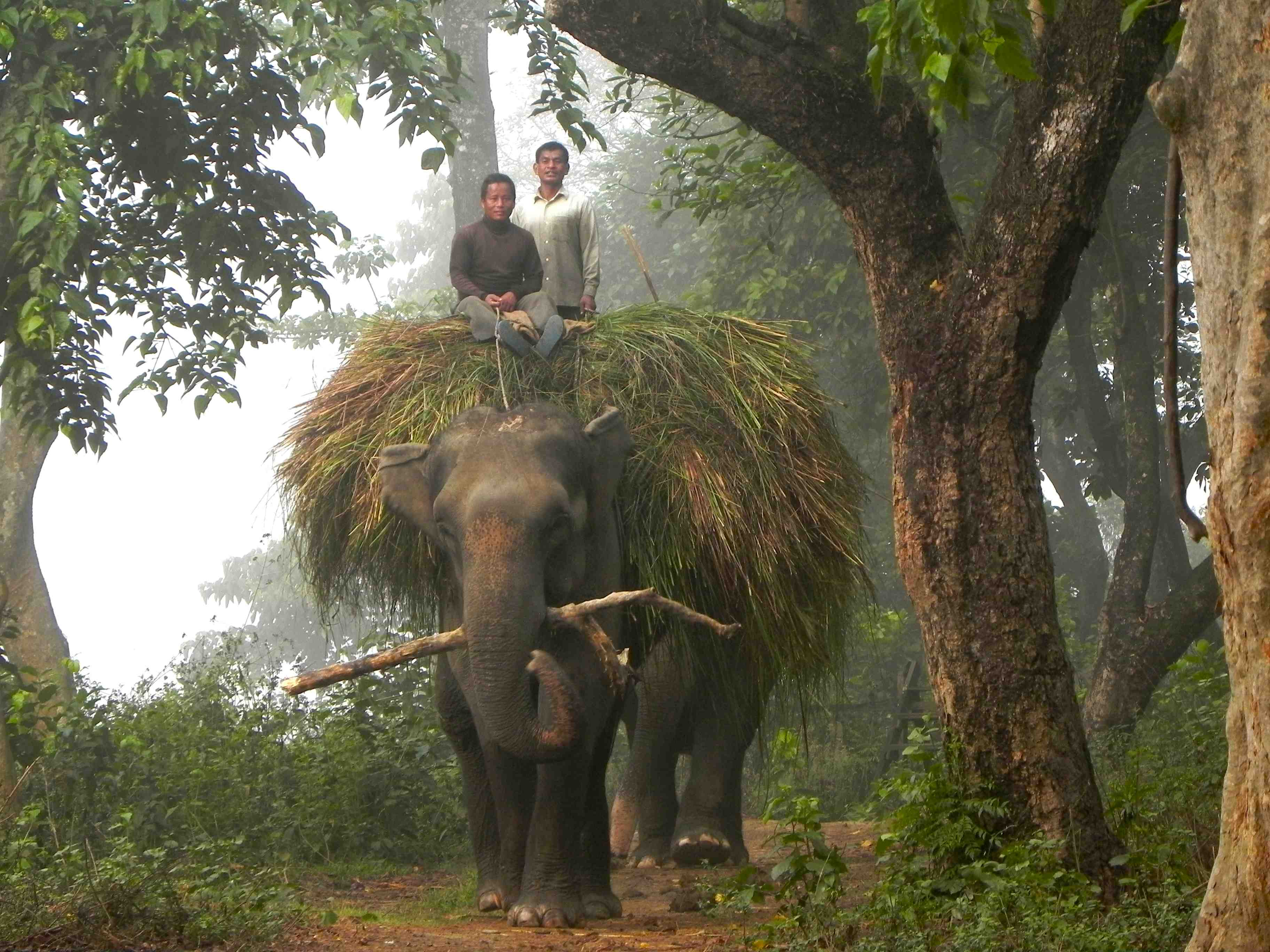Elephant Misery International Wildlife Bond