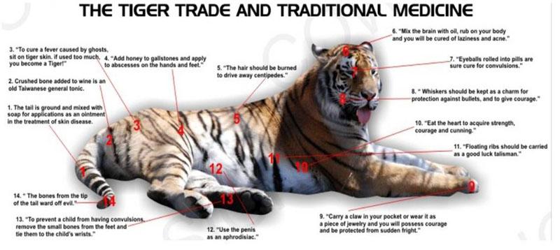 tiger20trade_clip_image002_0006