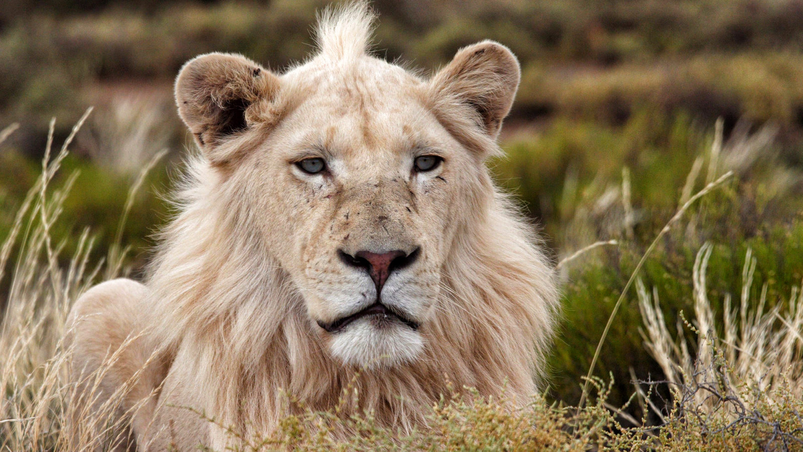 Trophy Hunting Part One: The nasty colonial sport of