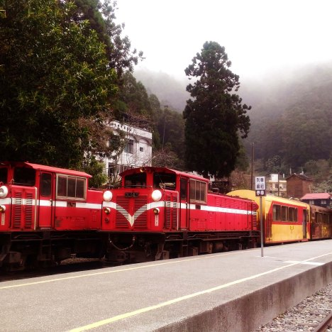 Trees and Trains of Alishan National Scenic Area