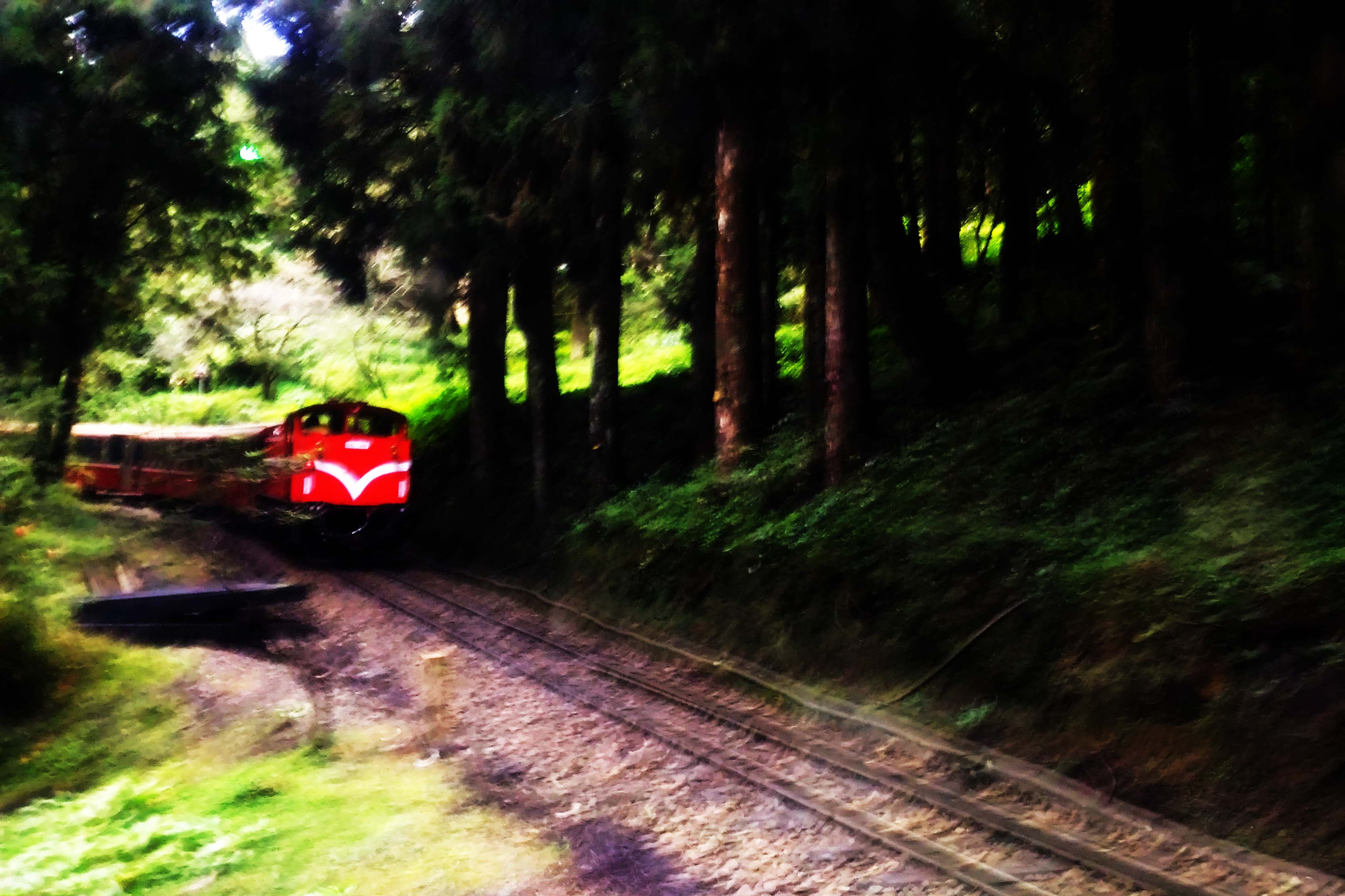 Trees and Trains of Alishan National Scenic Area in Taiwan