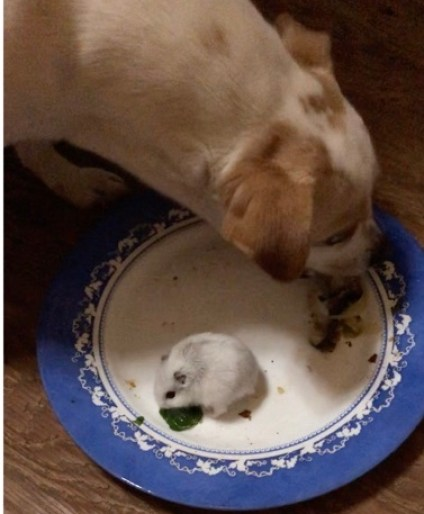 Amazing shot of predator and prey eating peacefully from the same plate! Motivation that anything is possible.