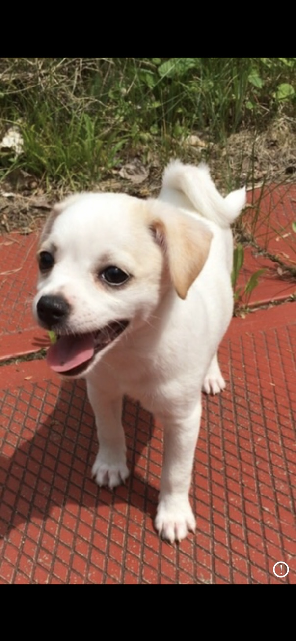 Adorable puppy-Pet Therapy and Happiness Boost!