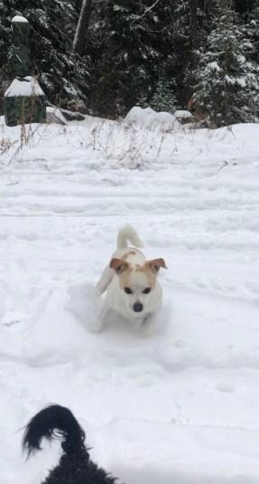 Piko 'skiing'