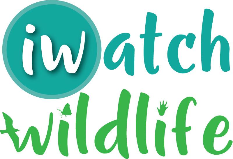 iWatch Wildlife logo portrait