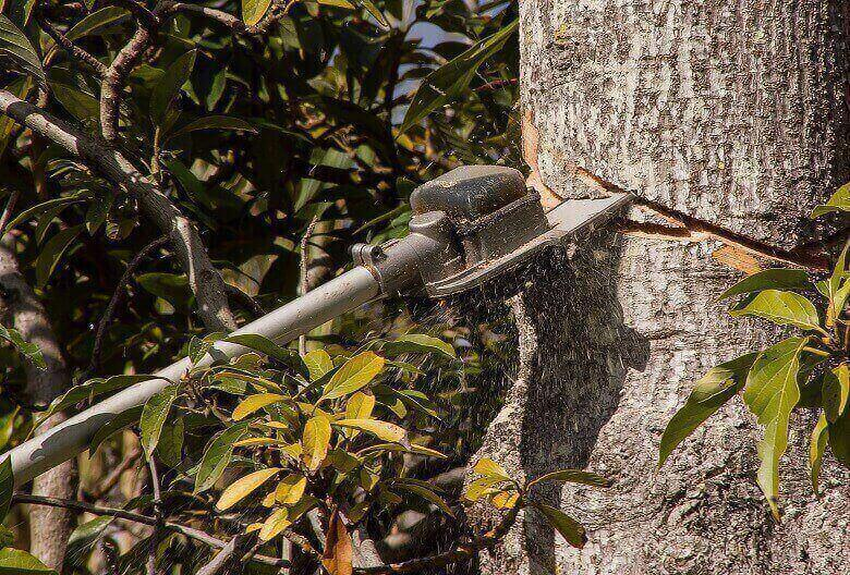 pole saw pruning