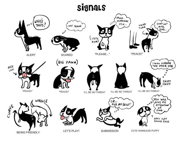 Los Angeles Dog Body Language