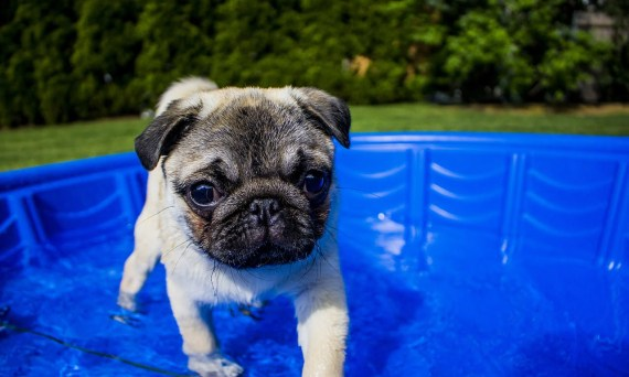 Dogs and Pools Los Angeles Dog Trainer