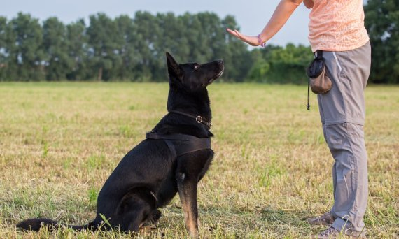 Immersion training can be a great option for dogs that need more than group sessions