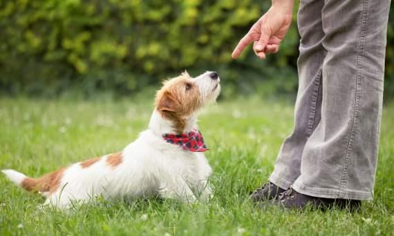LA puppy trainers